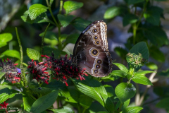 ButterFlyWorld (13)
