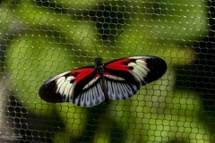 ButterFlyWorld (37)